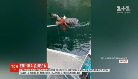В Канаде орел напал на осьминога и чуть не утонул