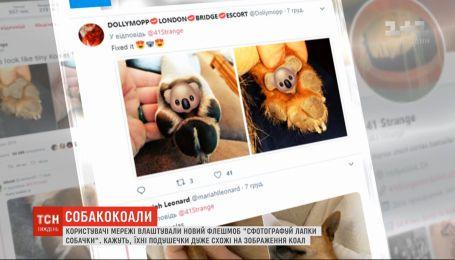 """Флешмоб """"Сфотографируй лапки собачки"""", конец света и соседские войны - новости онлайн-трансляции"""