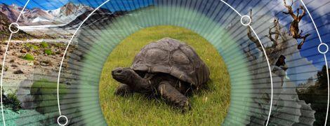 Дерево Будды и черепаха, которая пережила 39 президентов США: где искать самые старые живые организмы на планете