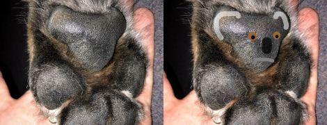 Юзеры заметили силуэты коал на собачьих лапах.и массово показывают снимки