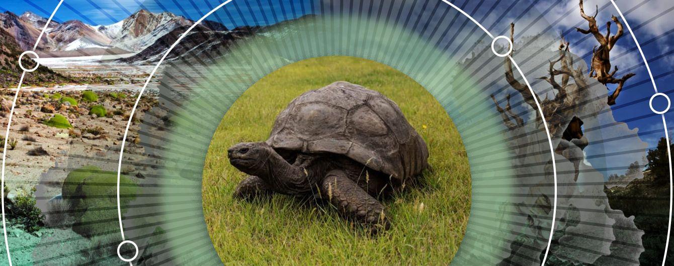 Дерево Будди та черепаха, яка пережила 39 президентів США: де шукати найстаріші живі організми на планеті