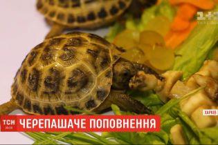 Харківський зоопарк уперше показав двійко степових черепашенят