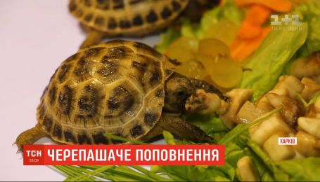 Харьковский зоопарк впервые показал пару степных черепашат