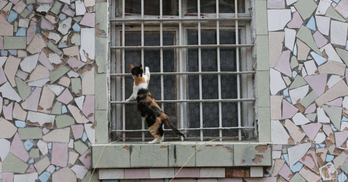 Под Киевом закрыли колонию, а местные коты и собаки остались непристроенными: что известно о судьбе четвероногих