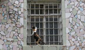 Під Києвом закрили колонію, а місцеві коти та собаки залишилися неприлаштованими: що відомо про долю чотирилапих