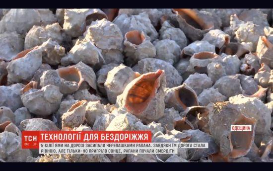 """На Одещині ями на дорогах """"полатали"""" мушлями рапанів: хто і чому вигадав таку """"технологію"""""""