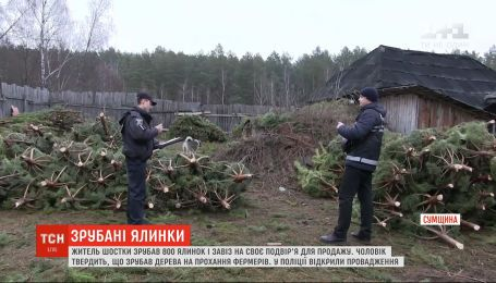 Житель Шостки зрубав 800 ялинок і незаконно завіз на своє подвір'я для продажу