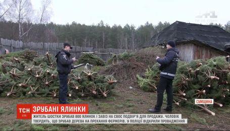 Житель Шостки срубил 800 елок и незаконно завез на свой двор для продажи