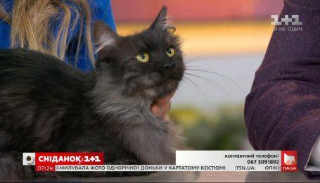 Кішечка Жасмін шукає новий дім