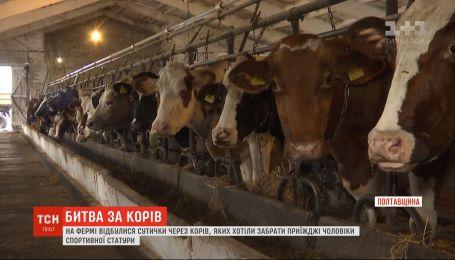 Мужчины спортивного телосложения пытались забрать с фермы в Полтавской области сотню коров