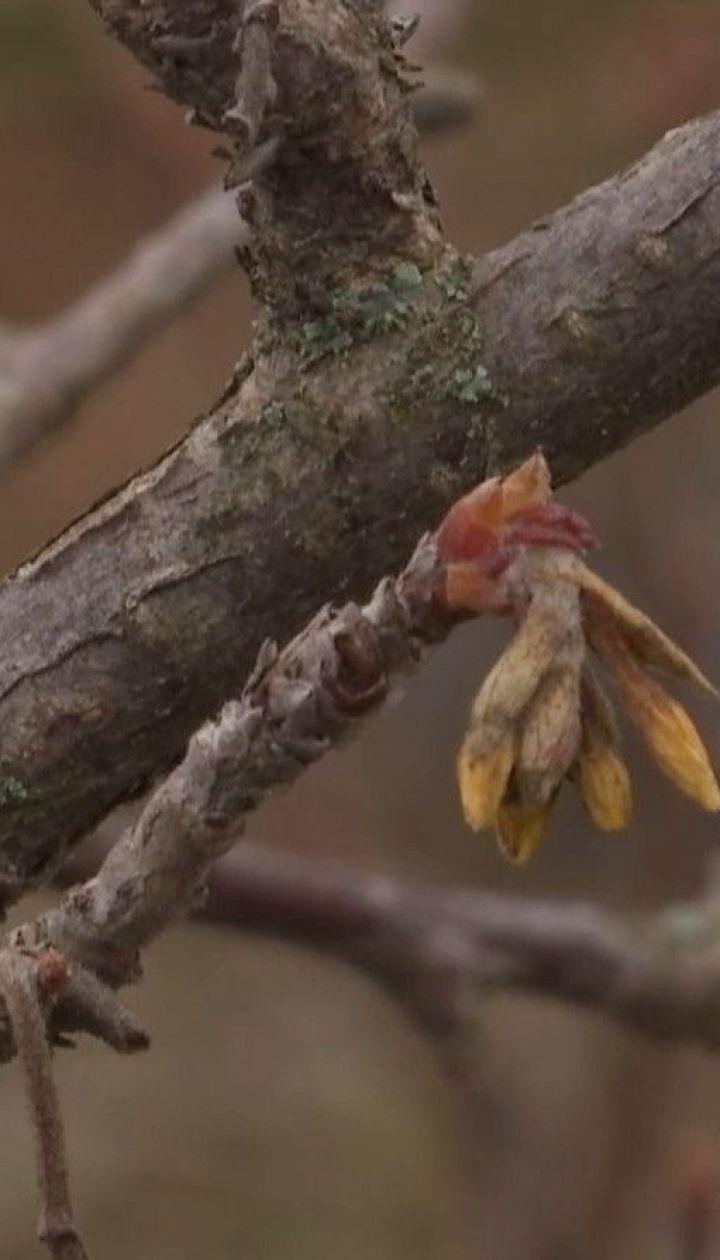 Подарунок природи чи кліматична небезпека: незвично тепла зима панує в Україні