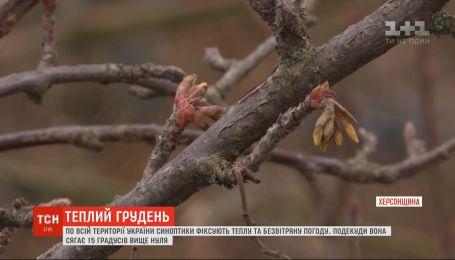 Подарок природы или климатическая опасность: необычно теплая зима царит в Украине