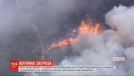 На востоке Австралии объявили чрезвычайное положение из-за лесных пожаров
