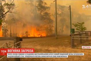 В Австралії оголосили надзвичайний стан через лісові пожежі