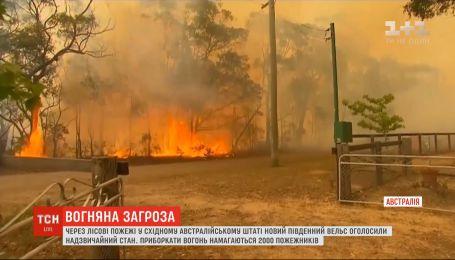 В Австралии объявили чрезвычайное положение из-за лесных пожаров