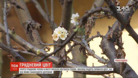 В Ровно из-за аномального тепла начали цвести деревья