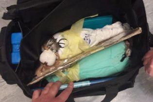 """Через """"Борисполь"""" из Украины пытались вывезти в сумке двух живых соколов"""