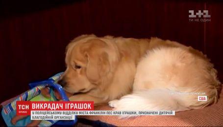 В полицейском участке Франклина пес воровал игрушки, предназначенные детской благотворительной организации