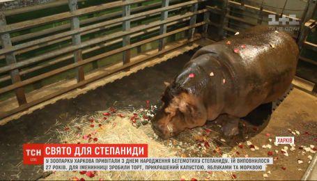 Святковий торт і пелюстки троянд: у зоопарку Харкова привітали з днем народження бегемотиху