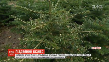 В Германии предприниматель продает бракованные елки, чтобы поощрить людей рационально использовать ресурсы
