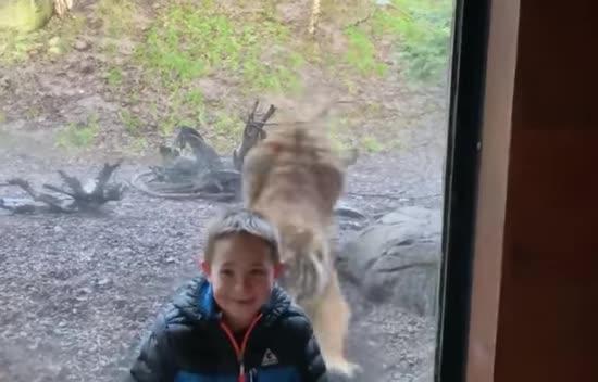 У дублінському зоопарку зняли напад тигра на малюка. Його врятувала скляна перегородка