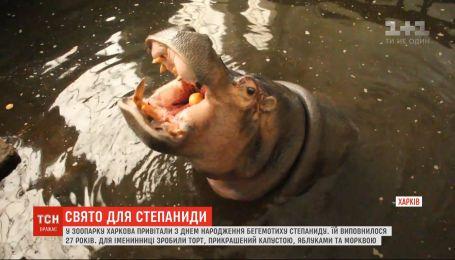В зверинце Харькова оригинально поздравили бегемотиху с 27-летием