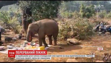Изголодавшийся слон ворвался на пикник в Индии