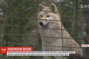 Зоозащитная организация во Франции выкупает зверинец, чтобы вернуть животных в дикую природу