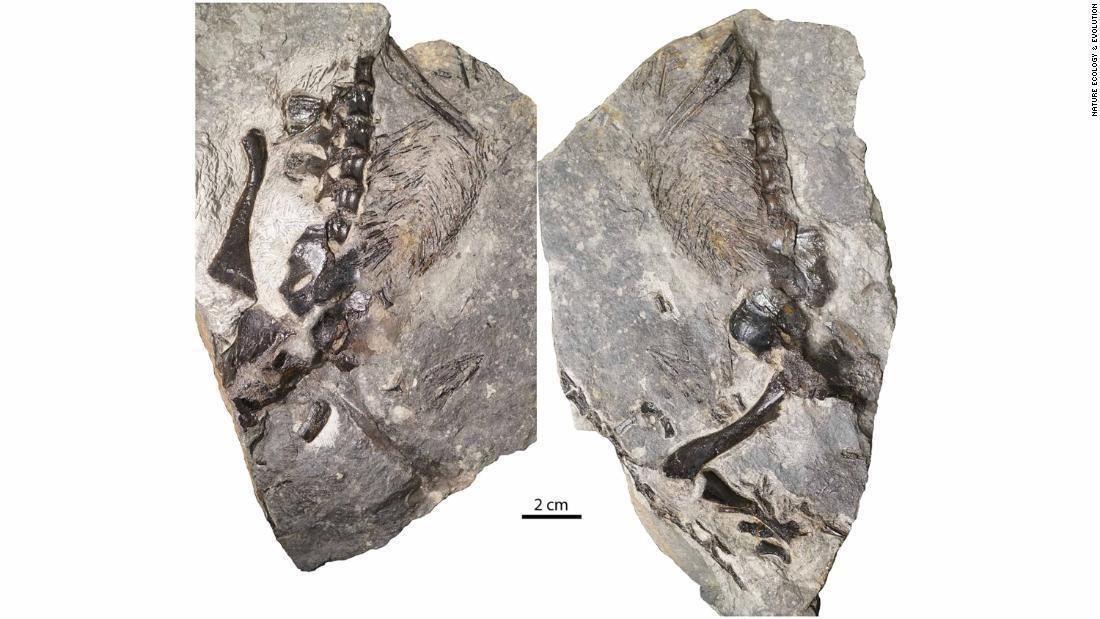 Скам'янілості