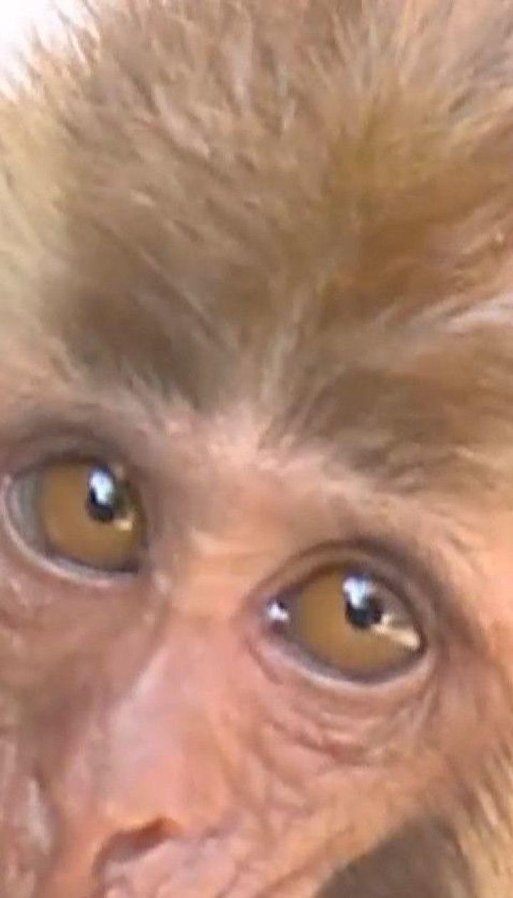 У Китаї селянин врятував мавпеня від смерті, і той віддячив йому щирими почуттями