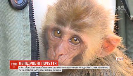 В Китае селянин спас обезьянку от смерти, и она отблагодарил его искренними чувствами