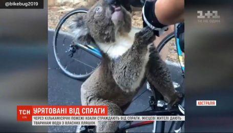 Австралийцы спасают от жажды животных, которые не могут найти ни пищи, ни воды из-за лесных пожаров