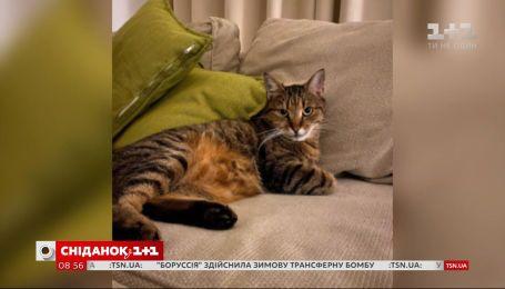 Кот, который стал гражданином Евросоюза, – история Честера