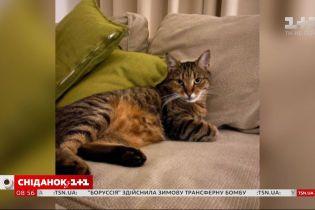 Кіт, який став громадянином Євросоюзу, – історія Честера