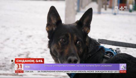 Страшный салют: как уберечь собаку от стресса во время новогодних фейерверков