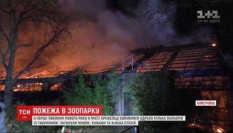 В немецком зоопарке в новогоднюю ночь произошел пожар: погибли 30 животных