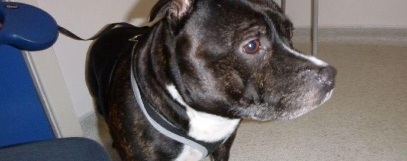 """""""Простите меня"""". Обездоленный британец оставил пса в церкви с трогательной запиской"""