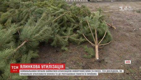 Как правильно утилизировать новогодние елки и сосны и где найти пункты приема деревьев