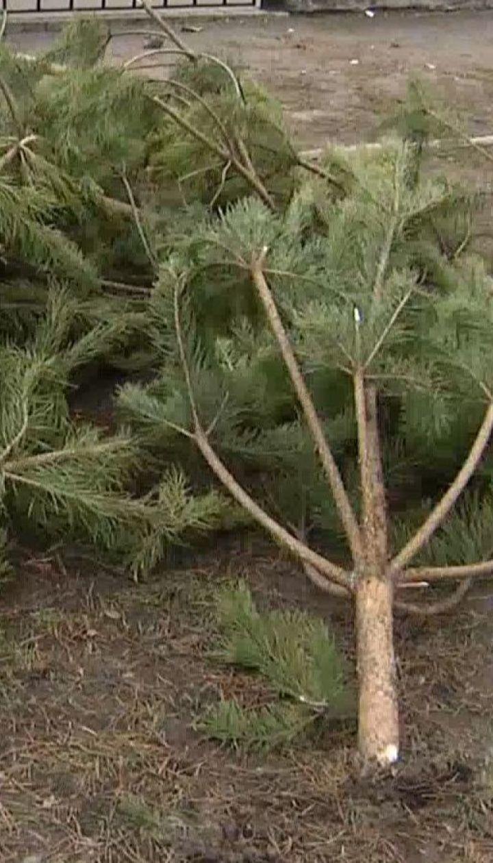 Як правильно утилізувати новорічні ялинки і сосни та де знайти пункти прийому дерев