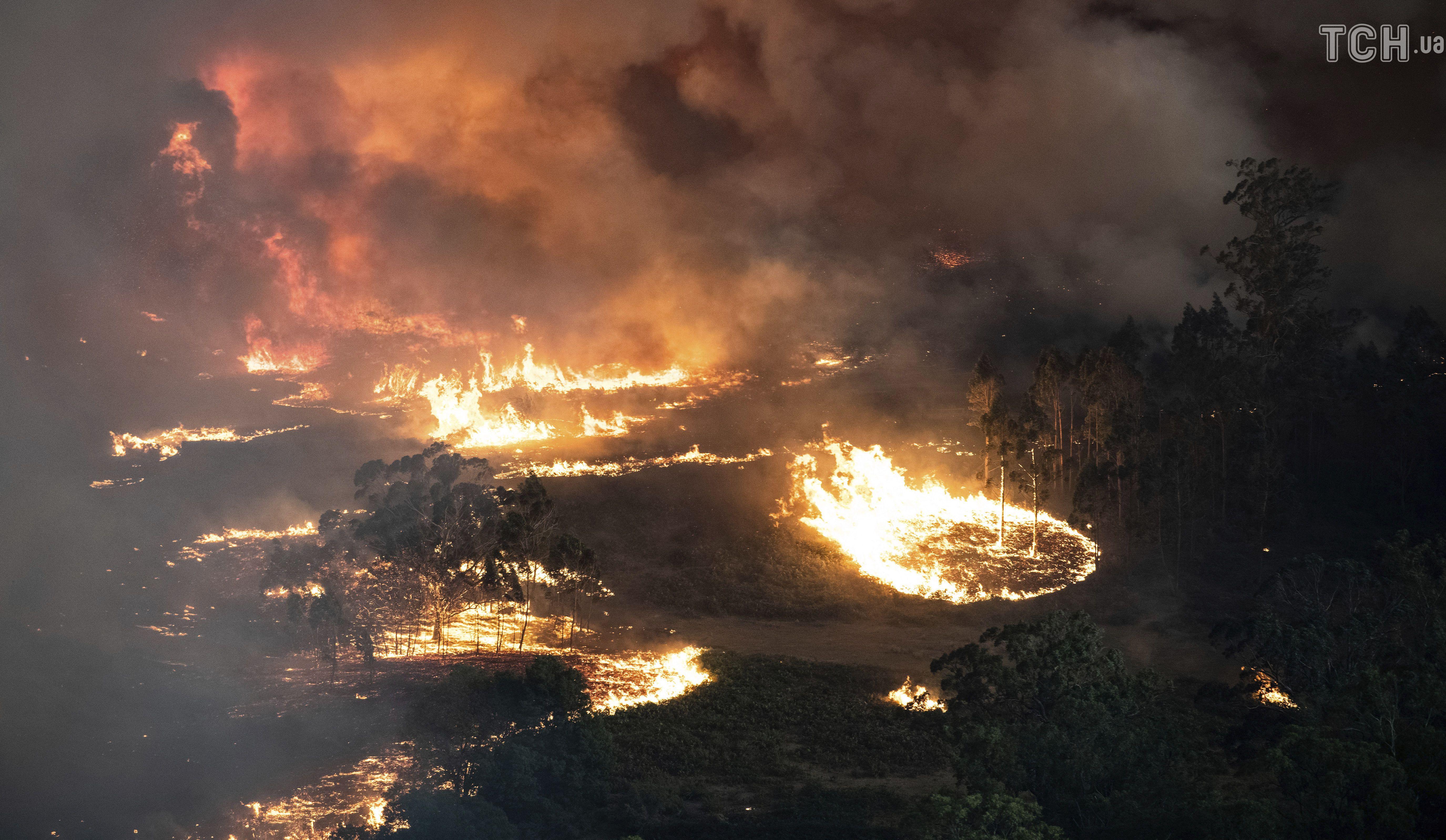 Лісові пожежі в Австралії_11