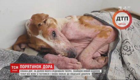 Люди повернули до життя скаліченого собаку, який ледь не помер у лісі