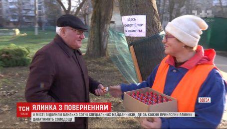 Елка в обмен на шоколад: одесситов поощряют не выбрасывать новогодние деревья