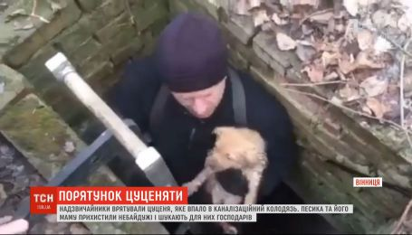 Винницкие чрезвычайники достали из канализационного колодца щенка