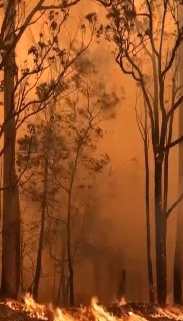 Через спекотну погоду та сильні вітри лісові пожежі в Австралії можуть тривати ще 2 місяці