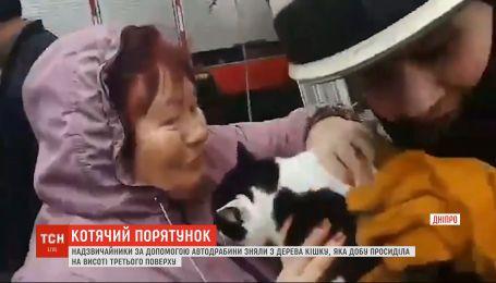 Спасатели в Днепре сняли кошку с высокого дерева