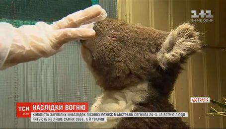 Австралійці масово рятують рідкісних тварин від несамовитого вогню