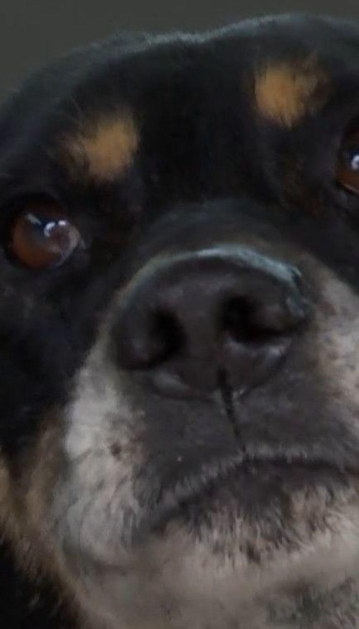 На Одещині люди врятували старенького пса, якого знайшли пораненим біля залізничної колії