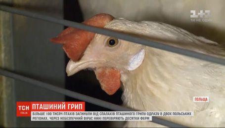 В Польше более 100 тысяч птиц погибли от опасного вируса