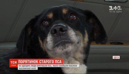 В Одесской области люди спасли старого пса, которого нашли раненым возле железнодорожного пути