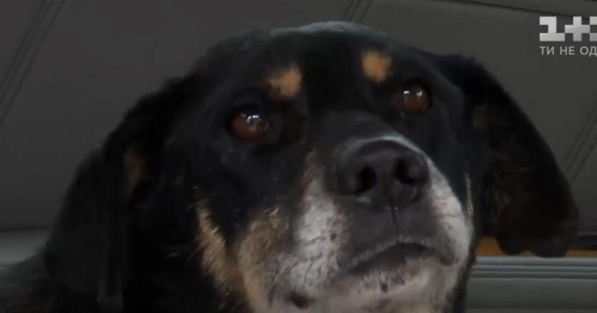 В Одесской области с железнодорожных рельсов спасли истощенного и избитого пса